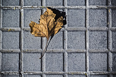 Autumn over squares (Ignacio M. Jimnez) Tags: flickrfriday square hoja leaf suelo ground ubeda jaen andalucia andalusia espaa spain ignaciomjimnez ruby3 matchpointwinner mpt515