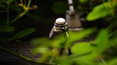 Hide and Seek (Alexandr Nuarin) Tags: starwars stormtrooper365 stormtrooper starwarsv starwarsvi starwarsforceawakens return jedi empirestrikesback endor lego legography legominifigs holiday pilot eisley nature minifigures minifigs macro moc