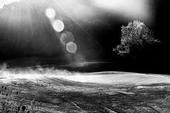 morning golf (DarioMarulli) Tags: laquila abruzzo golf mattina brina brinata morning nebbia paesaggio rugiada sole raggidisole albero trees vapore fumo prato italia italy landscape bw biancoenero bosco d3200 nikon nikonclubit natura nature