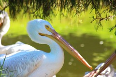 Swamp (Paige_Terhune) Tags: first comment follow like landscape animals animal zoo nature birds bird swamp