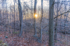 Ice in the Forest (John Prause) Tags: ice forest trees sussexcounty nj newjersey prause johnprause sunrise frost winter