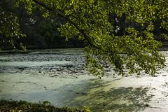 Wantijpark (Pieter Mooij) Tags: dordrecht zuidholland nederland nl wantijpark kroos vijver treurwilg tegenlicht willow