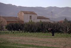 El Merino (gallegoespinosa.com) Tags: huerta trabajo