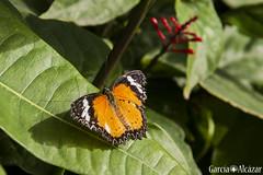 Mariposa 2 (Manolo G.A.) Tags: canon 50d 18200 mariposa butterfly mariposario njar almera