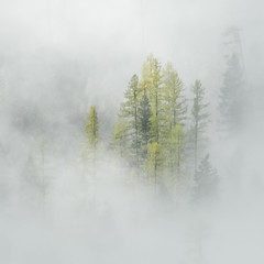 Week 41, Sumi-e, Pine Trees in Fog, DMLowry (dianemichaudlowry) Tags: october2016 trees montana surreal fog ethereal