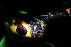 ExpoNMO001 (hechos de historias) Tags: bosque reservanatural santacatalina forest