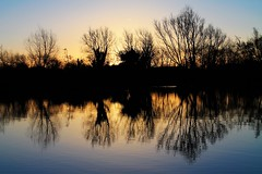 Lake Sunrise (Rob Felton) Tags: sky reflection water silhouette sunrise bedford bedfordshire felton countrypark lumen priorycountrypark robertfelton fingerslake
