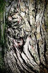 Bark Baby 2 (theshakes72) Tags: wood abstract tree texture grain bark shape tone