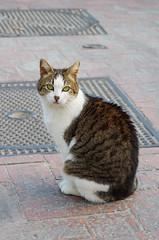 Capri  (* GEORG *) Tags: italy capri italia pentax   f70210 smcpentaxf70210mmf456ed f70210f456