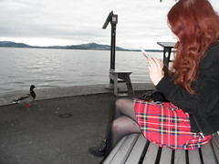 A collection of voyeuristic ducks (faberlatusm - 200 mio views) Tags: animals ducks pussies publicupskirt bottomless spread pantieless pantyhose