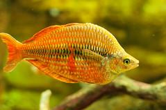 Acuario Agosto 2016 (68) (Fernando Soguero) Tags: acuario zaragoza acuariodezaragoza aragn turismo aquarium nikon d5000 fsoguero fernandosoguero