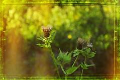 nikon_d90_nikkor_18_105_vr_21.08.16_03 (malemonada) Tags: forest wood green summer outdoor latesummer depthoffield texture plant bokeh