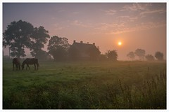 Sunrise on a farm (fire111) Tags: sunrise farm belgium warm morning sun horses nature landscape tree trees nikon d800