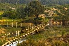 Humedal de Mantagua (lamemoriademisojos) Tags: humedal mantagua