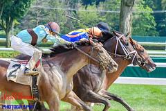 To the Finish Line at Saratoga (Scottwdw) Tags: track thoroughbred newyork saratoga silks outdoors jockeys helmet running racecourse horses mud sports sloppy racing saratogasprings unitedstatesofamerica 840