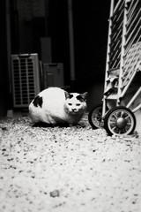 neko-neko1488 (kuro-gin) Tags: cat cats animal japan snap street straycat  monochrome