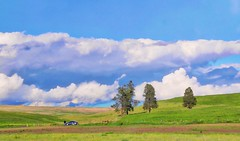 Cloud Watching (robinlamb1) Tags: landscape easternwashington rollinghills clouds whiteclouds bluesky outdoor fourtrees man car watching