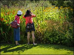 P1100197-1-2 - Garden Visitors (dangle earrings) Tags: rhsharlowcarr visitors border sunshine flowers dangleearings panasonicdmcgx8