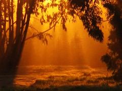 CALOR DE BOSQUE (MARVAR7) Tags: sun sol nature naturaleza contraste luz light bosque forest atardecer sunset