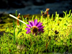 The beauty of life its self (christianhon268) Tags: beautiful beauty professional photography photo canon sx 400is chtistian hon great macro close up wide angle colors contrast bright brilliant shot national grass flower light forest moss cols cold nature