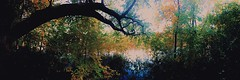 The Hollow (Autumn) (mccs_10) Tags: trees outside ethereal halloween sleepyhollow panoramic color dark water leaves autumn