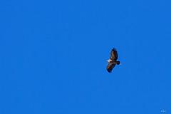 jocou-8680 (verolauro) Tags: alpesdehauteprovence brume diois drome fuji jocou provence vaucluse vautours vercors veroniquelaurolillo