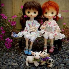 Prim and Fig (TutuBella) Tags: jerryberrydolls prim fig daisydayes piggy pig owl owlet garden babydoll heidiott handmadeleathershoesbykrataiscrafts twins dolls berrybasic2011