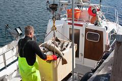 Haul 'Em Up _5408 (hkoons) Tags: northatlantic northwesticeland skagipeninsula westfiords westfjords atlantic harbor iceland skagastrnd bay boat buoy cod fiord fish fishermen fishing fjord inlet island marine north ocean saltwater salty sea ship vessel water