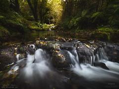 Ambiente... (diegogm.es) Tags: olympus asturias otoo bosque naturaleza agua water forest spain espaa microfourthirds micro43 mirrorless nature