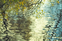 reflections (B. Rad) Tags: water ripples reflections leaves nature carl zeiss jena biometar120mmf28