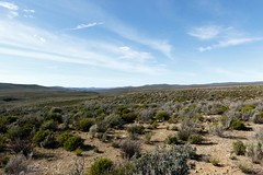 Green and blue landscape of Tankwa Karoo (markdescande) Tags: africa wind dry natural cape nature dawn south background karoo road outside geology gannaga african sky environment valley stone path grass scenic landscape sunset tankwa twist rises fog eastern outdoor clouds arid desert dusk gravel sun blue ravine rock geological pass cloud sunrise mist wild park nobody misty national mountain