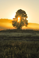 Lonely Tree (ukasz Babula) Tags: poland september summer autumn early morning sun sunny sunshine sunrise sunbeam warm tree lonely fog foggy mist field grass nature natural landscape outdoor nikon d60 nikkor 1855 serene calm peaceful