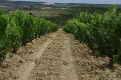 IMGP8530 (Lucifer's Gaze) Tags: pentax k5  spain summer   winery  vinyard  cellar  rioja docarioja  sierradetolono