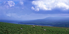 Photo of Sheep's Eye View from Dinas Head -1