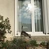 P20161009_105436487_3527159A-65FE-4B92-BF4A-341AD7F32A19 (ji0405hye) Tags: france loches chat village rue maison vie beau 아침 프랑스 고양이 산책 길 마을 로쉬
