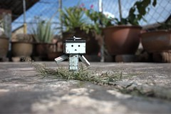 Afternoon stroll (TakeiOoi) Tags: danbo danboard revoltech toys toyphotography yostuba