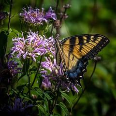 Summer Work (Portraying Life) Tags: michigan unitedstates handheld nativelighting wildflower