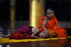 _MG_6557-18_04_2016_wat-thail-wattanaram-maesot-thailande-cochez-christophe-2 (christophe cochez) Tags: burmes burma birmanie birman myanmar thailand thailande maesot myawadyy monk bonze novice religion watthailwattanaram travel voyage bouddhisme buddhism portrait