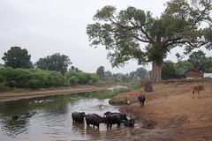 Kawardha - Chhattisgarh - India (wietsej) Tags: kawardha chhattisgarh india landscape river sonyalphadslra900 sonyvariosonnart1635mmf28za sal1635z bhoramdeo wietse jongsma