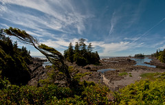 blue sky, wild trail (DeCo2912) Tags: wild pacific trail rim national park ucluelet beautiful british columbia vancouver island canada samyang 8mm walimex