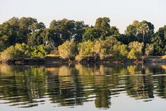 South Africa 2016 (mcmessner) Tags: adventure africa bj boat reflection ripple river sunrise sunriseboatride suspended tongabezi tongabezilodge water zambeziriver zambia livingstone
