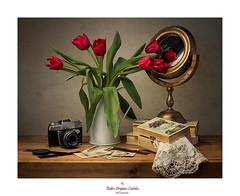 Feliz cumpleaos...... (.... belargcastel ....) Tags: bodegn still flores flowers tulipn tulipanes tulip camarafotos vintage analgica fotos libros books espejo mirror belargcastel belnargeso espaa spain galicia rojo red