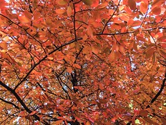 Fall Foliage in Boston ((Jessica)) Tags: olmstedpark autumn orange tree foliage seasonal newengland boston seasons massachusetts fall leaves emeraldnecklace trees jamaicaplain red