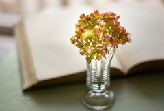 Autumn Moment (Captured Heart) Tags: fall fallcolors autumn book reading hydrangea