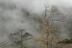 Silence (Teruhide Tomori) Tags:       aboupass mountain landscape gifu nagano r158 chbusangakunationalpark tree nature japan forest mist autumn   fog rain  okuhida