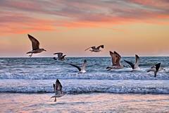 Despedida do sol (Zza Lemos) Tags: sol sunset selvagem portugal pordesol puestasdesol puestadelsol mar gua natur natureza gaivotas areia algarve vilamoura