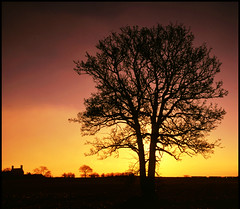 another day on the farm comes to an end (david.hayes77) Tags: sunset tree 6x6 silhouette wall backlight farm 1999 velvia staffordshire lichfield contrajour hass500