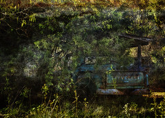 CHEVY IN THE SHADOWS (NC Cigany) Tags: old trees chevrolet abandoned truck hidden chevy