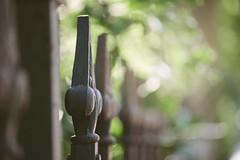 Friedhofszaun (Gret B.) Tags: friedhof fence bokeh zaun metall baum eisen tiefenschrfe