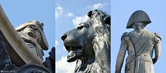Trafalgar Square, Nelson and Lion (sciencebase) Tags: london siteseeing summer city